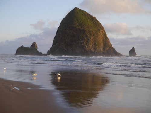 haystack rock sunset gulls