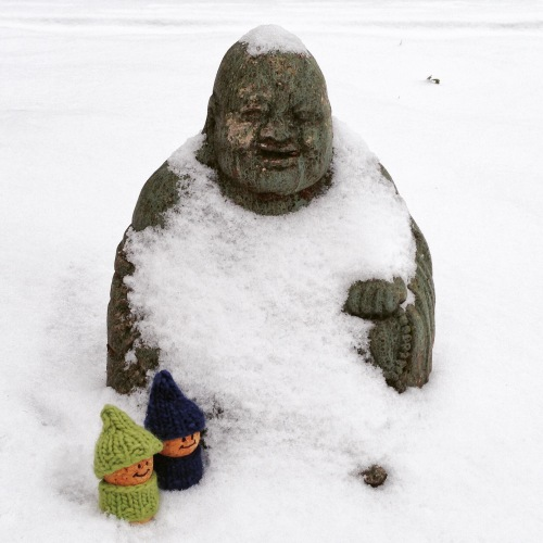 chilly buddha corkies
