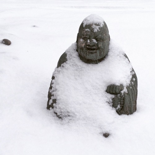 chilly buddha