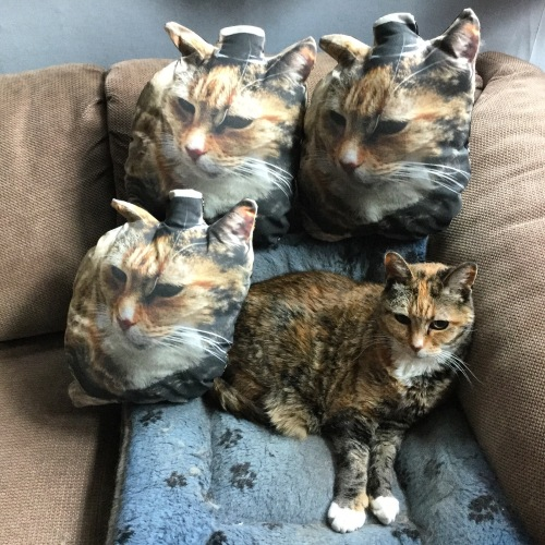 cat pillows with cat