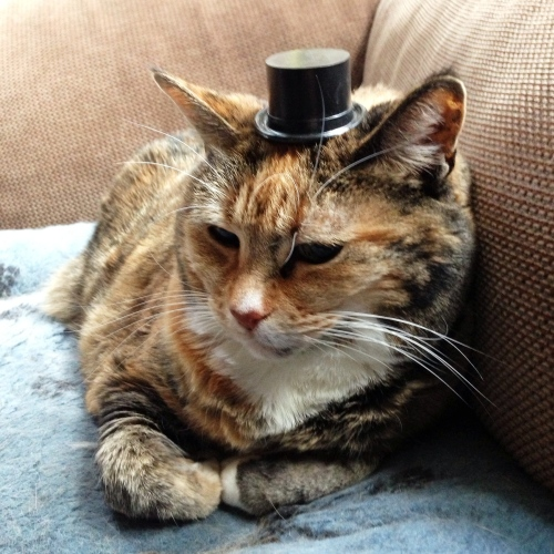 top hat Mookie