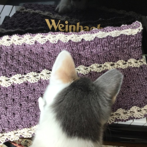 cat knit helper