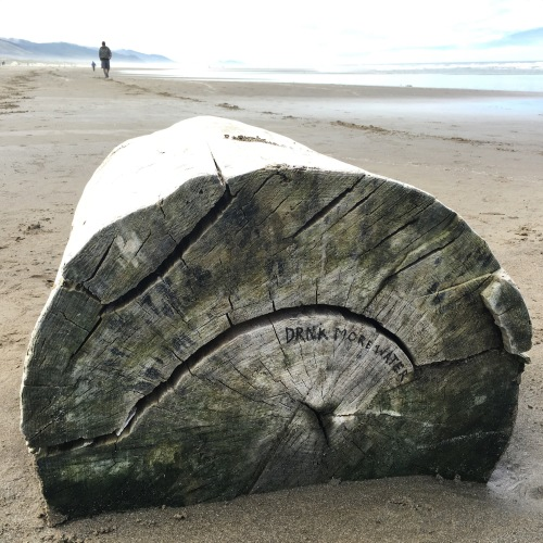 message from the sea on a log