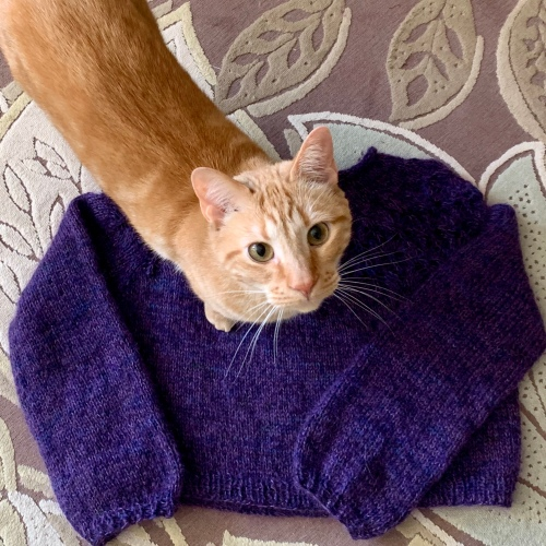 Love Note sweater with helpful knitting cat
